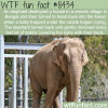 why elephants are the best animals wtf fun facts