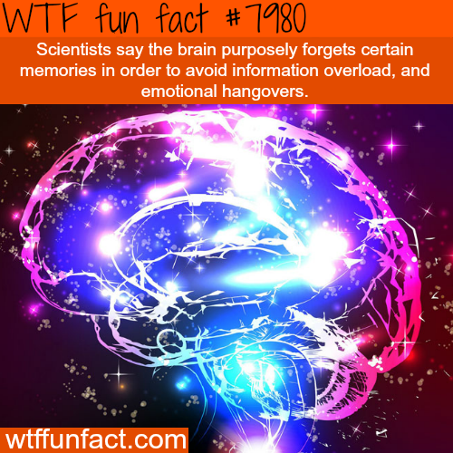 Why forgetting is good sometimes - WTF fun fact