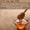 why honey never goes bad wtf fun fact