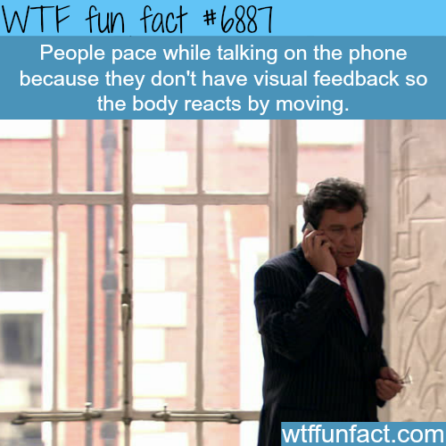 Why people pace while talking on the phone - WTF fun facts