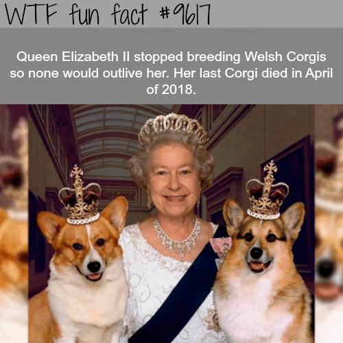 Why Queen Elizabeth stopped breeding Corgis - WTF fun fact