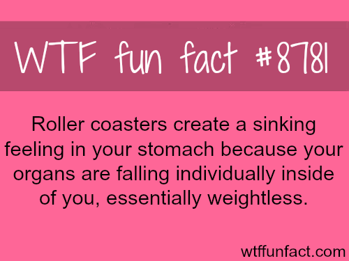 Why roller coasters create a sinking feeling - WTF fun facts
