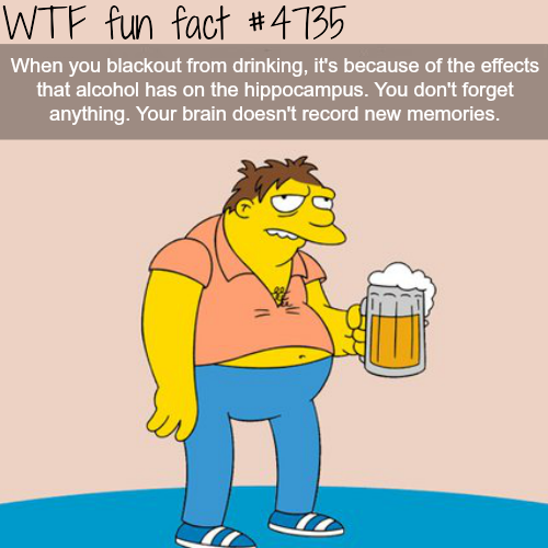 Why you don't remember anything when drunk - WTF fun facts