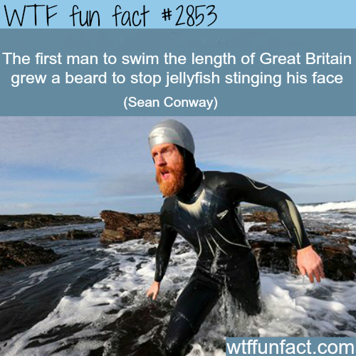 Another reason why you should a beard -WTF fun facts