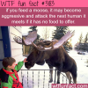 why you should not feed moose wtf fun facts