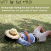 why you should start taking naps wtf fun fact