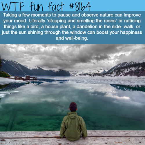 Why you should take your time and observe nature - WTF fun fact