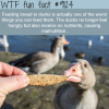 why you shouldnt feed bread to ducks wtf fun