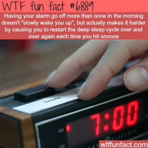 Why you shouldn't hit snooze - WTF fun fact