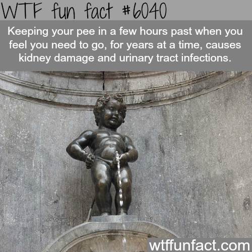 Why you shouldn't hold your pee for too long - WTF fun facts