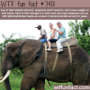 why you shouldnt ride on elephants facts
