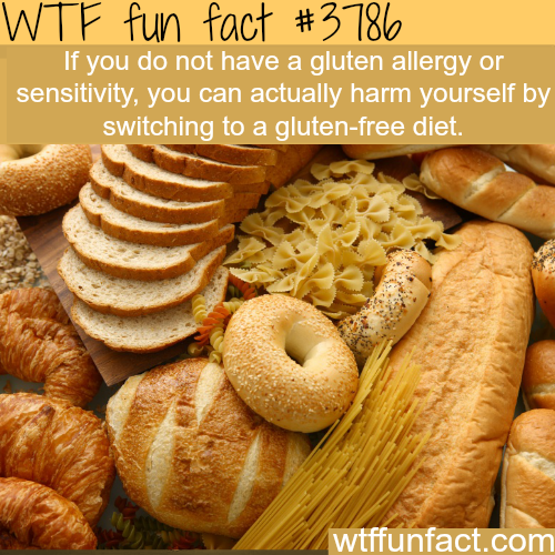 Why you shouldn't switch to gluten-free diet - WTF fun facts