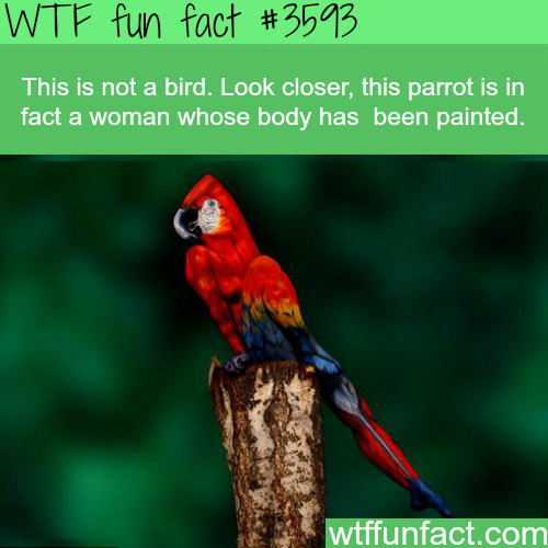 Woman painted as a parrot - WTF fun facts