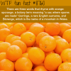 words that rhyme with orange wtf fun facts