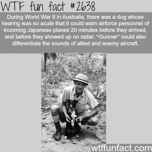 World War 2 Dogs