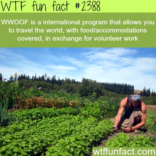 WWOOF: Travel the world in exchange for volunteering -WTF funfacts