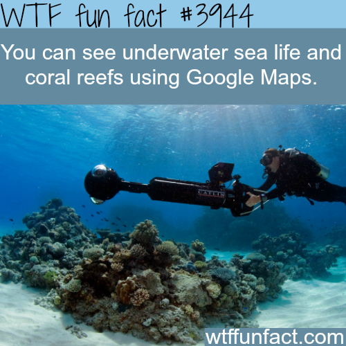 You can see underwater sea life on google maps-WTF fun facts