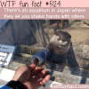 you can shake hands with otters in this japanese