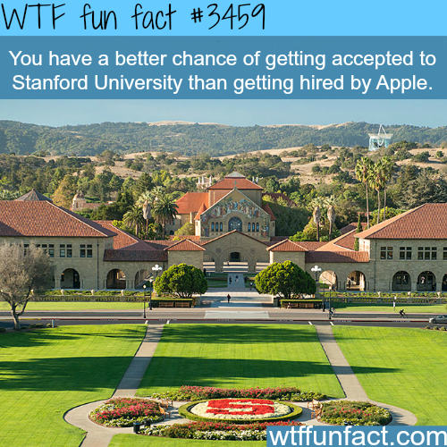 You have a better chance to go to Stanford than…- WTF fun facts