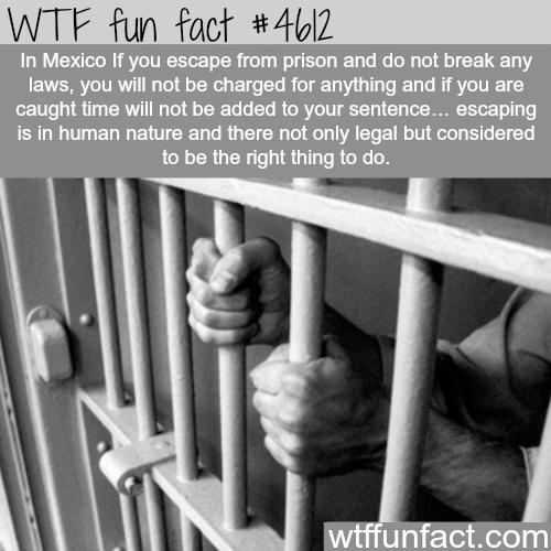 You have the right to escape prison in this country - WTF fun facts