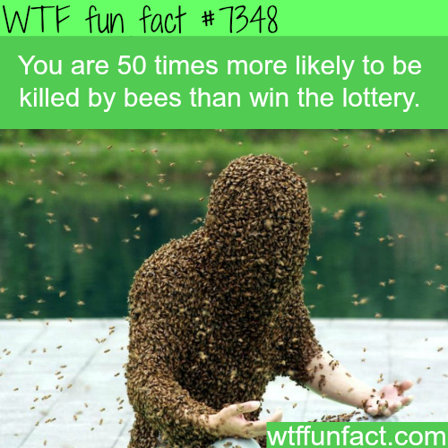 Your chances of winning the lottery - WTF fun facts