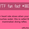 your heart rate slows down when you touch water