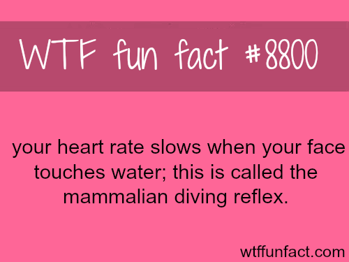 Your Heart Rate Slows Down When You Touch Water - WTF fun facts