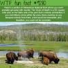 zone of death yellowstone park wtf fun fact