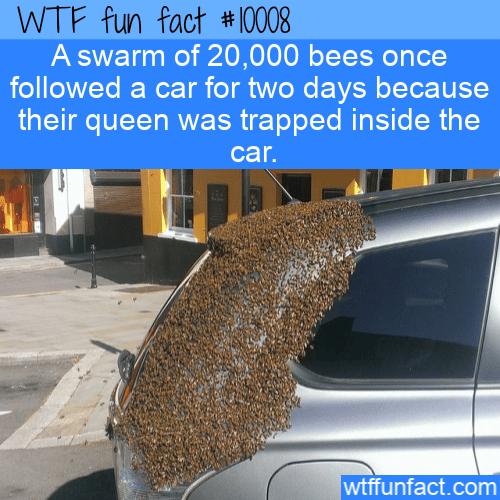 WTF Fun Fact -Following Car For Queen