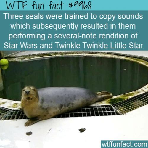 Fun Animal Fact Singing Seals