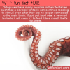WTF Fun Fact – Tentacle With Mind Of Its Own