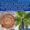 WTF Fun Fact – Palm… Grass?