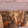 WTF Fun Fact – Pub Inside A Tree