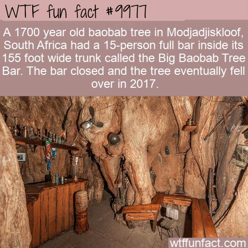 WTF Fun Fact - Pub Inside A Tree