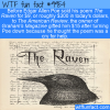 Fun Fact – The Raven Sold For Cheap