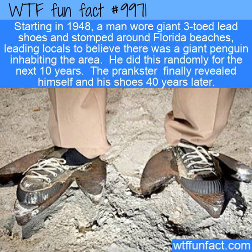 fun fact giant penguin hoax