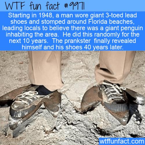 fun fact giant penguin hoax