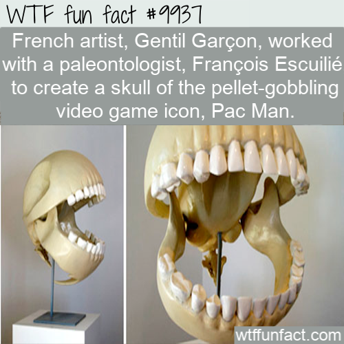 fun fact pac man skull