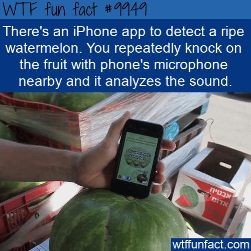 fun food fact watermelon app