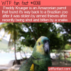 WTF Fun Fact – Freddy Krueger Parrot