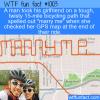 WTF Fun Fact – Awesome Proposal