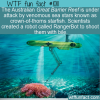 WTF Fun Fact – Reef Protector