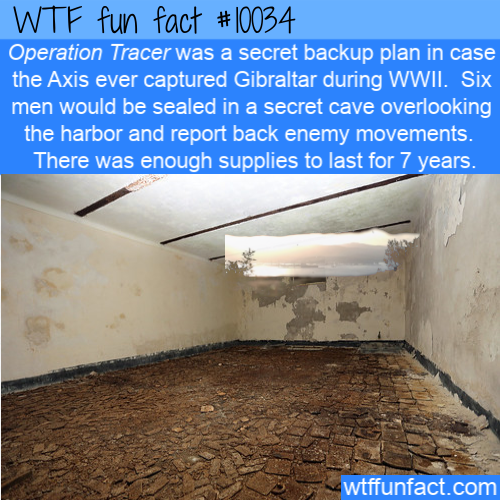WTF Fun Fact - Operation Tracer