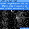 WTF Fun Fact – Spiders Webs