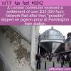 WTF Fun Fact – Pigeon Poop