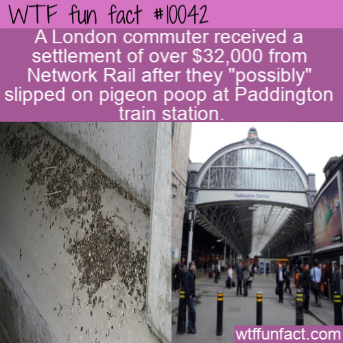 WTF Fun Fact - Slipped On Poop