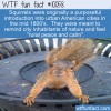 WTF Fun Fact – Squirrels On Purpose