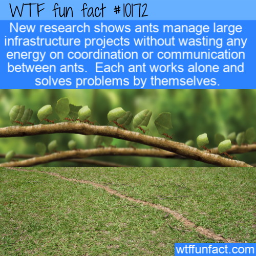 WTF Fun Fact - Ant Infrastructure PRojects