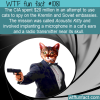 WTF Fun Fact – CIA Cat Spies