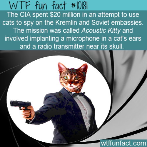 WTF Fun Fact - CIA Spy Cat
